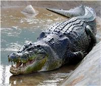 «أكله غدرا».. رجل يطعم تمساحًا فيصبح وجبته الرئيسية