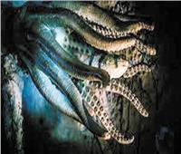 اكتشاف حيوان غريب يحيا منذ ١٨٠ مليون عام