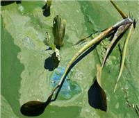 مرض جديد يضرب أستراليا يؤدي للشلل والوفاة.. والسبب الطحالب السامة