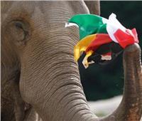 يورو 2020   «الفيل باشودا» يتوقع نتيجة مباراة «ألمانيا والمجر»