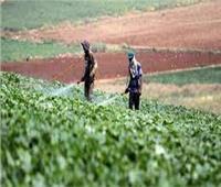 زراعة الشرقية: تقديم كافة أوجه الدعم للفلاحين والمربين لزيادة إنتاجية المحاصيل