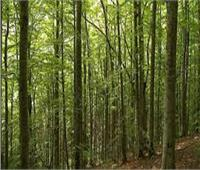 «الزراعة» تستعرض جهود رفع كفاءة الغابات الشجرية