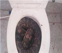 أثناء جلوسه على المرحاض.. ثعبان ضخم يلدغ رجل مُسن