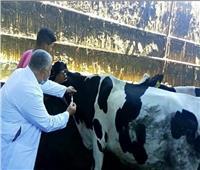 تحصين 143 ألف و971 رأس ماشية ضد مرض الحمى القلاعية بالمنوفية