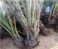 تقرير نشاط معهد بحوث أمراض النباتات خلال شهر يونيو2021