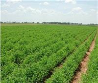 التنمية الزراعية تكشف تفاصيل أزمة أراضي بئر العبد ورابعة بسيناء  فيديو