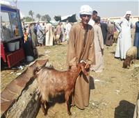 نرصد أسعار اللحوم داخل «سوق السبت» للماشية في المنيا