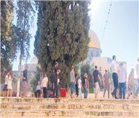 مئات المستوطنين يقتحمون الأقصى فى حماية شرطة الاحتلال