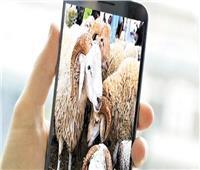 خروف العيد على «فيسبوك» بالتقسيط والتوصيل «دليفري»