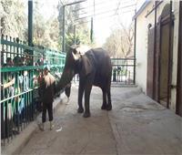 حديقة الحيوان تستقبل 18 ألف زائر خلال أول أيام العيد