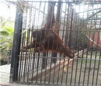 الزراعة : المجازر تستقبل 8000 اضحية و20 الف زائر لحديقة الحيوان .. صور