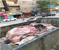 حملات لرفع المخلفات من الشوارع بحي بولاق الدكرور