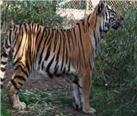 «الزراعة»: 40 ألف زائر لحديقة الحيوان في ثالث أيام عيد الأضحى
