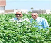 «الزراعة»: مدير الفيوم يتابع حقول المحاصيل الصيفية| صور