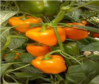 ننشر أبرز ملامح البرنامج الوطني لإنتاج تقاوي الخضر