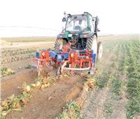 استمرار حصاد البنجر بمشروع غرب المنيا