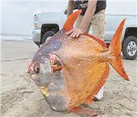العثور على «أوبا» بأحد الشواطئ الأمريكية