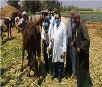 تحصين  3 ملايين رأس ماشية ضد الحمى القلاعية والوادي المتصدع