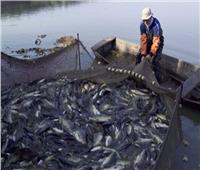 قانون حماية وتنمية البحيرات يعيد «الشبكة والسنارة» للعصر الذهبى| تقرير