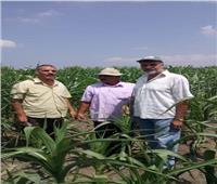 5 توصيات مهمة  لمزارعي الذرة الشامية أبرزها ري المحصول باكرا