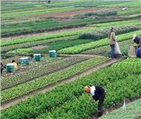 «الحجر الزراعي»: فتح 40 سوقا جديدا للصادرات الزراعية بالخارج خلال 3 سنوات