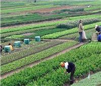 «المركزية للحجر الزراعي»: فتح 40 سوق عالمي جديد أمام الصادرات المصرية
