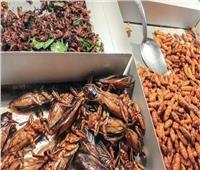 حقيقةعلمية«الحشرات» مصدرغنيبالبروتين
