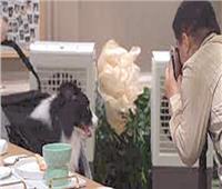 يقدم 20 وجبة  مطعم صيني لراحة «الكلاب»