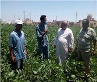حملات مرورية لزيادة إنتاجية محصول فول الصويا بالفيوم