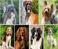 دراسة| «الكلاب» تكشف أكاذيب البشر