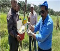 تركيب «المصايد الفرمونية» لمقاومة دودة الحشد الخريفية بالوادي الجديد | صور