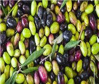 توصيات هامة لمزارعي محصول الزيتون