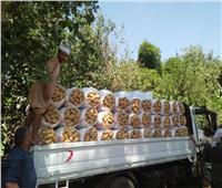 تصدرتها الموالح والبطاطس.. ارتفاع الصادرات الزراعية إلى 4.2 مليون طن