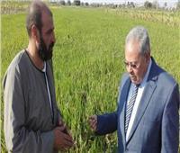 «عرابى» كلمة السر فى انقاذ الفلاحين من غرامة زراعة الأرز