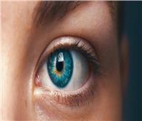 أطعمة تقوي أعصاب العين.. أبرزها «صفار البيض»