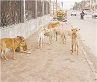 الكلاب الضالة.. خطر منسى بالشوارع