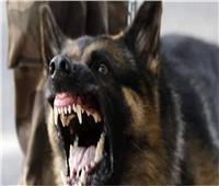 كلب مسعور يعقر 4أشخاص بقريةأحمد عرابي بمركز بدرفي البحيرة