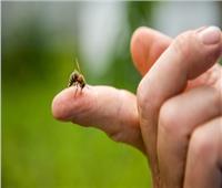 يقلل ظهور التجاعيد ويعالج ٱلام المفاصل.. فوائد «سم النحل»