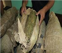 القبض على متهم بحوزته 1,500 كجم «بانجو» فى أسوان