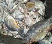 ضبط 1.1 طن أسماك فاسدة داخل مطعم بالجيزة