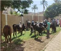 فحص وعلاج وتلقيح أكثر من 4800 حيوان مجانا ببني سويف