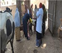فحص وعلاج 4863 حيوانًا لصغار المزارعين ببني سويف مجانًا