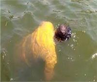 انتشال جثة شاب مجهول الهوية غارقًا بمياه ترعة الإسماعيلية بالقليوبية