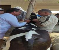 الزراعة: قافلة بيطرية مجانية لعلاج مواشي صغار المربين بالمنوفية