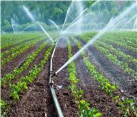 الزراعة: منظومة الري الحديث تساعد في زيادة الإنتاج وتحسين جودة الأراضي| فيديو