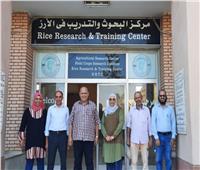 مدير «بحوث أمراض النباتات» يتفقد الأصناف الجديدة من محصول الأرز