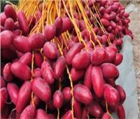 البلح.. فوائد مذهلة وقيمة غذائية عالية