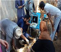 «الزراعة»: علاج وفحص 5900 رأس ماشية لصغار المزارعين بالمنوفية