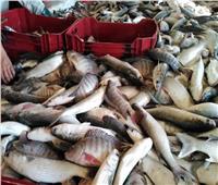 الزراعة: تحقيق الاكتفاء الذاتي من «الأسماك» و «الدواجن» والفائض للتصدير    فيديو