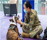 البنتاجون: لم نترك كلاب الخدمة العسكرية الأمريكية في أفغانستان
